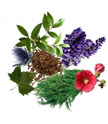 معجون آلرژی و آسم